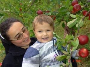 Berba jabuka u Fojnici
